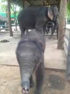 "Baby elephant says, ""Hello!"""